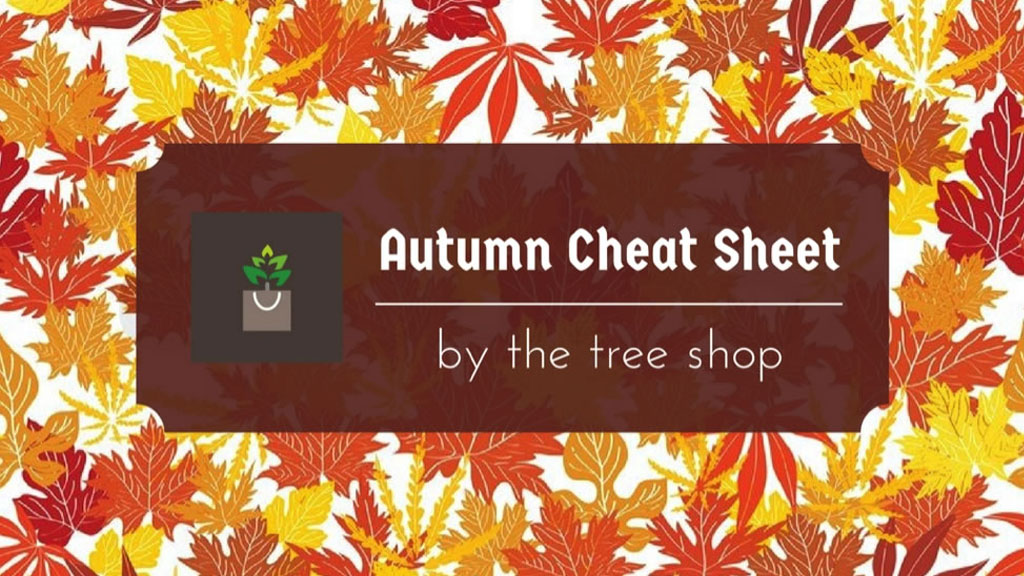 Autumn Cheat Sheet by The Tree Shop Online Plant Nursery Melbourne