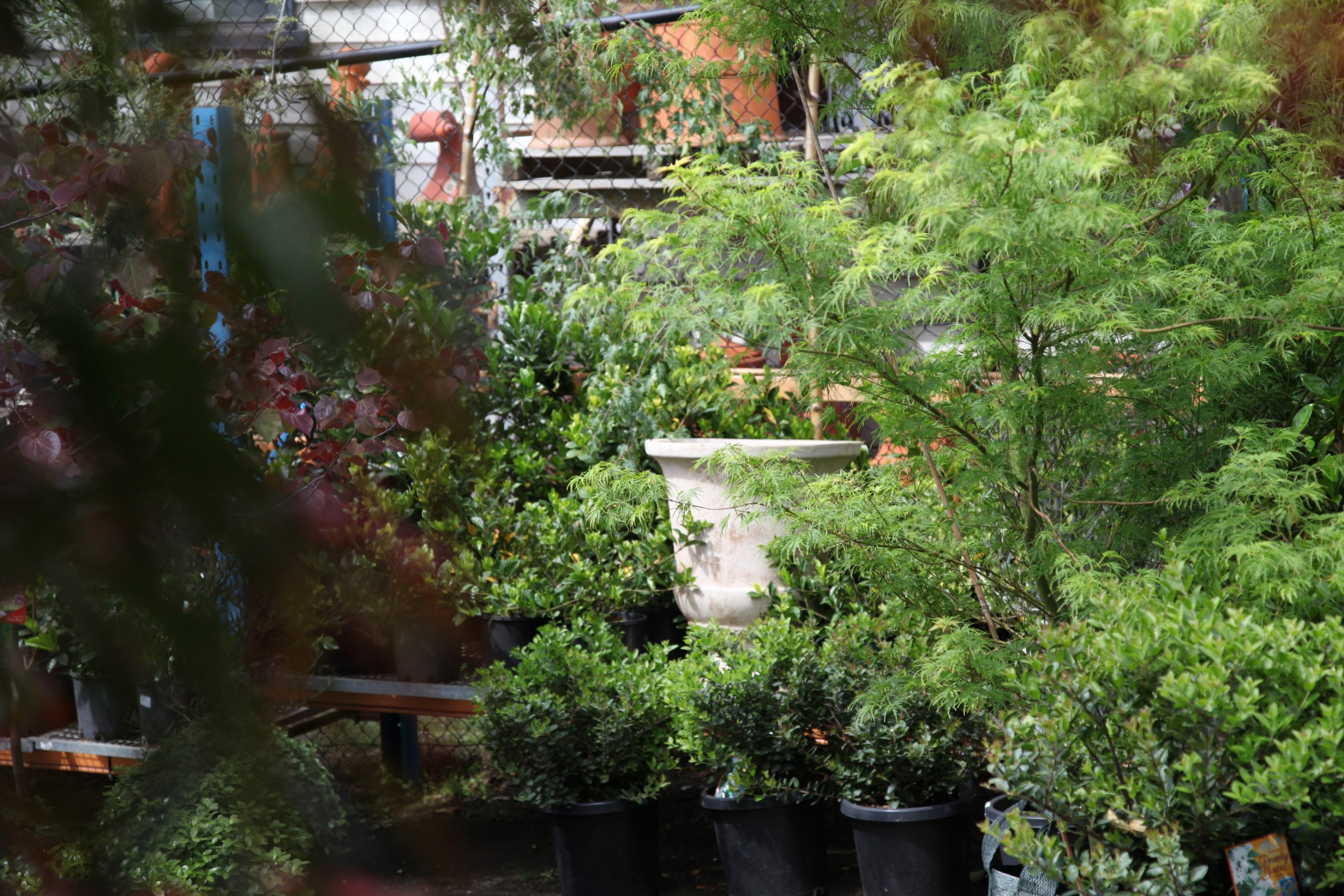 Trees for Small Backyards
