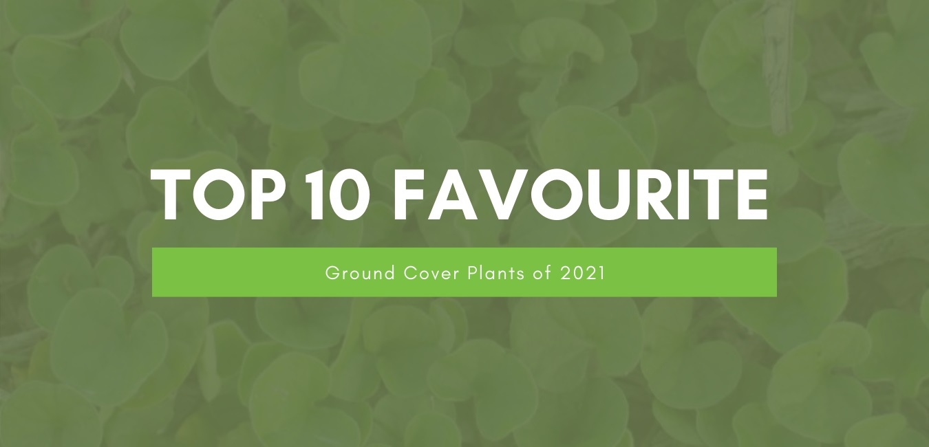 Our Top 10 Favourite Ground Cover Plants of 2021