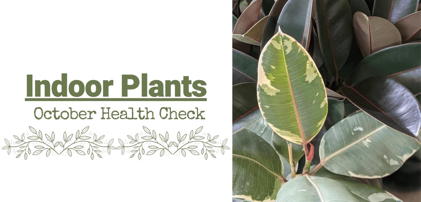Indoor Plants – October Health Check